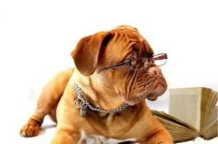 Hunde Tierhalterhaftpflicht im Vergleich
